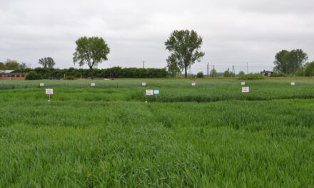 Europejski Zielony Ład, czyli jak zadbać o zrównoważoną gospodarkę i rolnictwo?